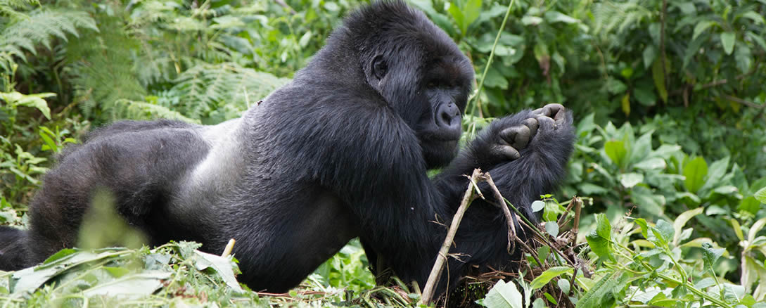 rwanda-gorilla-trip