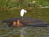 14 Days Uganda Rwanda Safari